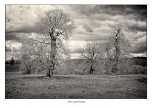 David Ireland_Tree's Castle Howard