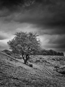 3_Anna Hill